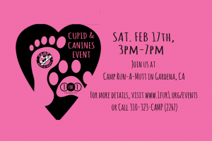cupid & canines event 2018