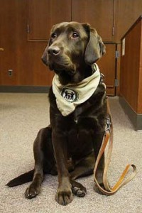 animal assisted therapy dog - Amos