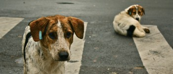 adopt on national mutt day