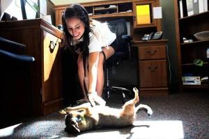 ct-met-aj-dogs-allowed.jpg-20120623