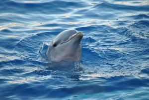 dolphin-893755_640