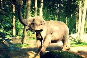 elephant-404873_640