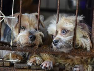 adopt a mutt day
