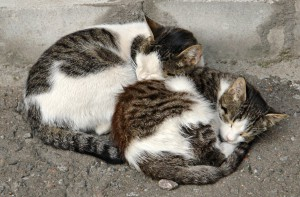 street cats and AAA grant