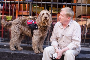 Gander Service Dog and his veteran
