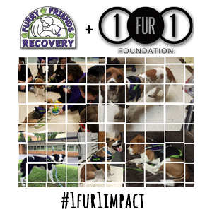 1fur1 & ffr therapy dog partnership