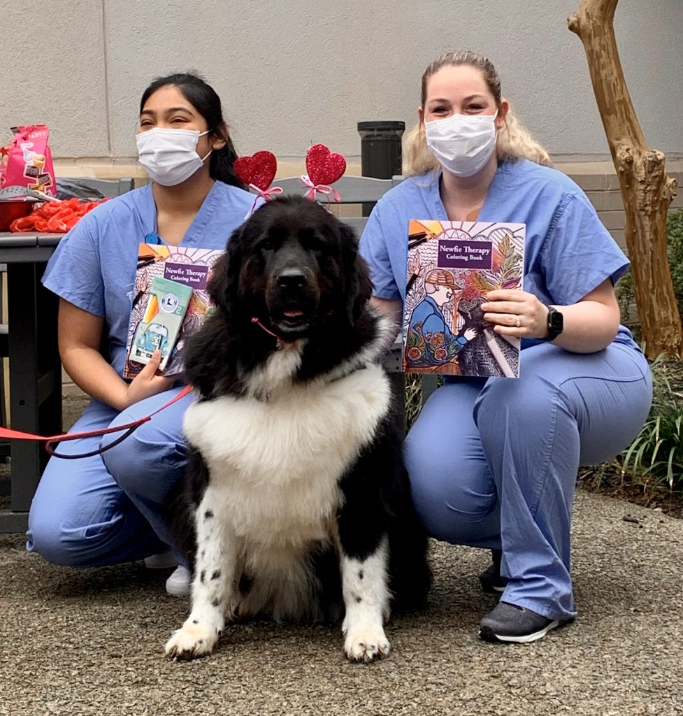 newfie therapy and 1fur1 news